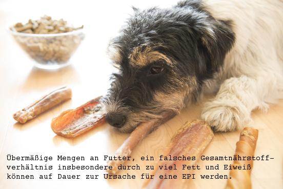 Exokrine Pankreasinsuffizienz Epi Beim Hund
