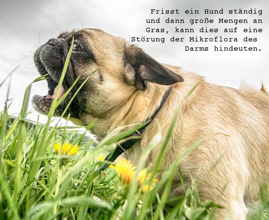 Generelle Verdauungsstorungen Beim Hund